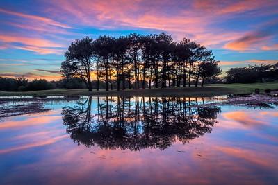 Reflection, Sea Ranch, California