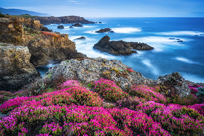 Bihler Point & Spring Bloom Study 4, Sea Ranch, California