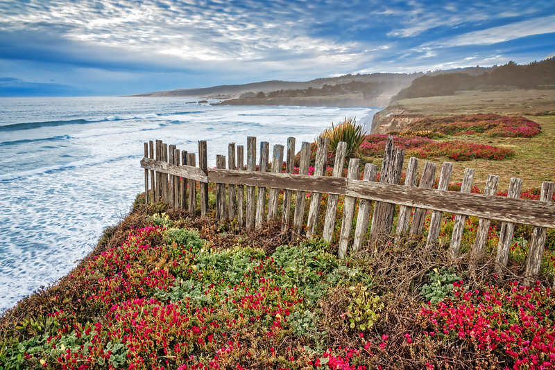 Flowers & Fence, Sea Ranch, California