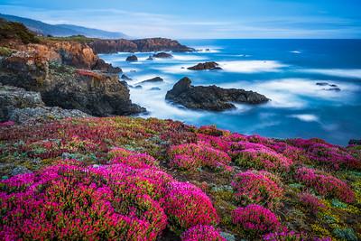 Bihler Point & Spring Bloom, Study 2, Sea Ranch, California