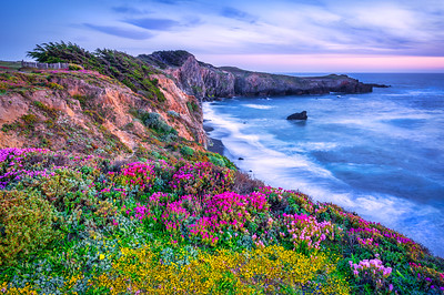 Spring Flowers & Black Point, Sea Ranch, CA