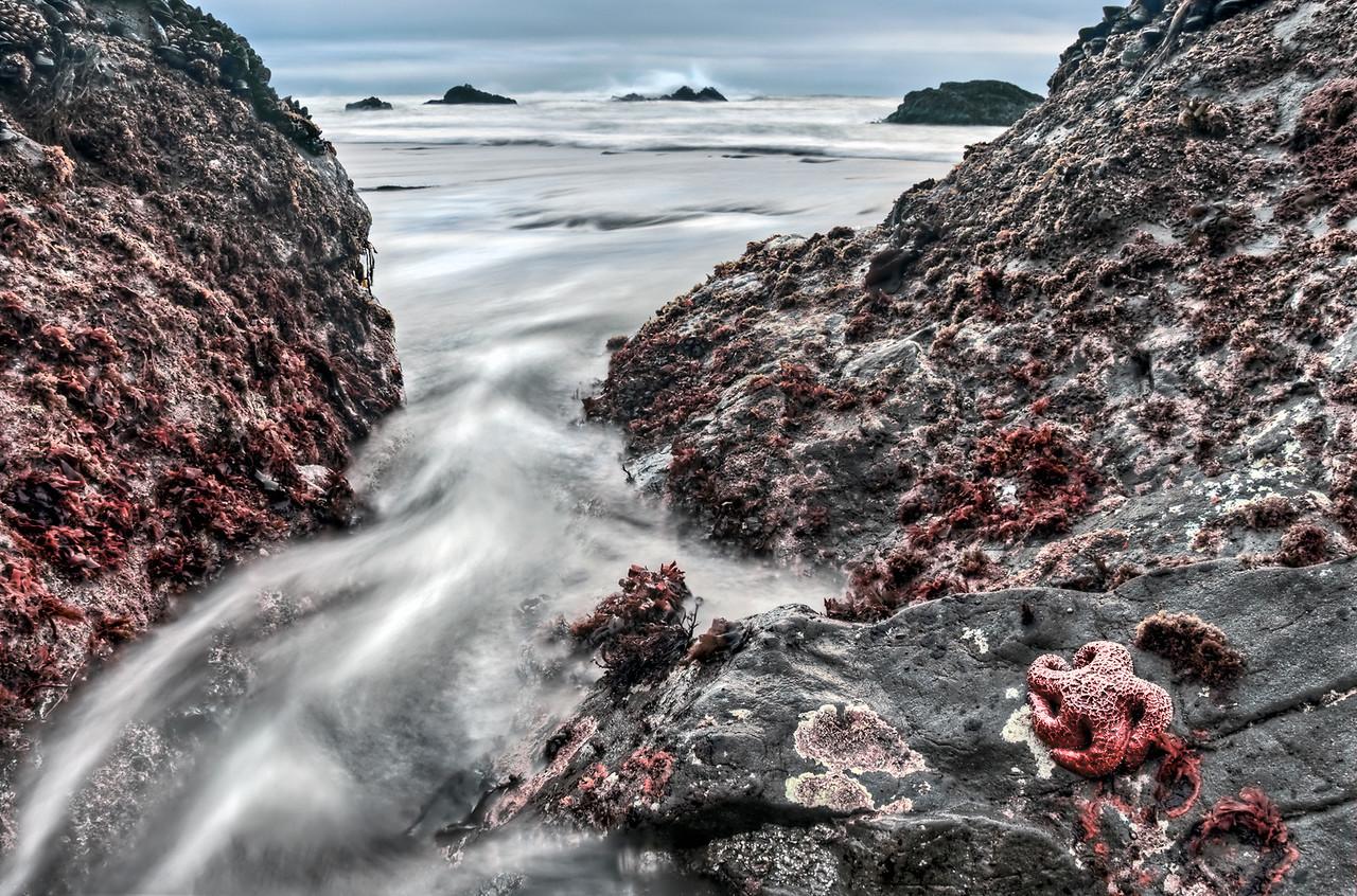 Sea Star, Sea Ranch, California