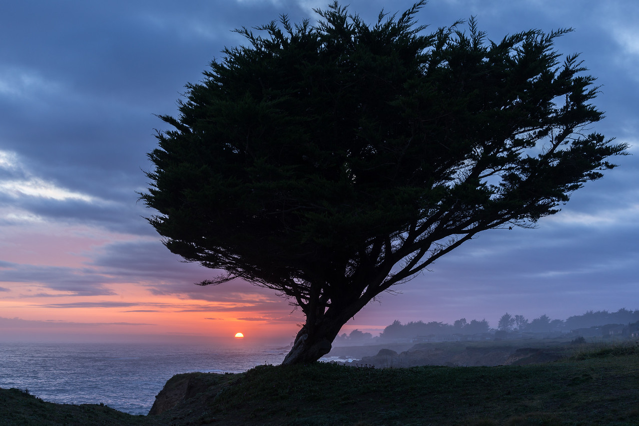 Setting Sun & Cypress, Sea Ranch, California