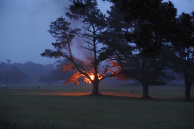 Tree-Fire-20130610
