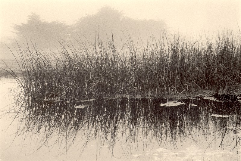 Pond & Fog, Sea Ranch, California