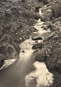 Monarch Creek, Sea Ranch, California