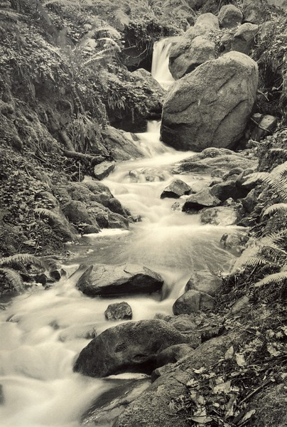 Monarch Creek, Study 2, Sea Ranch, California