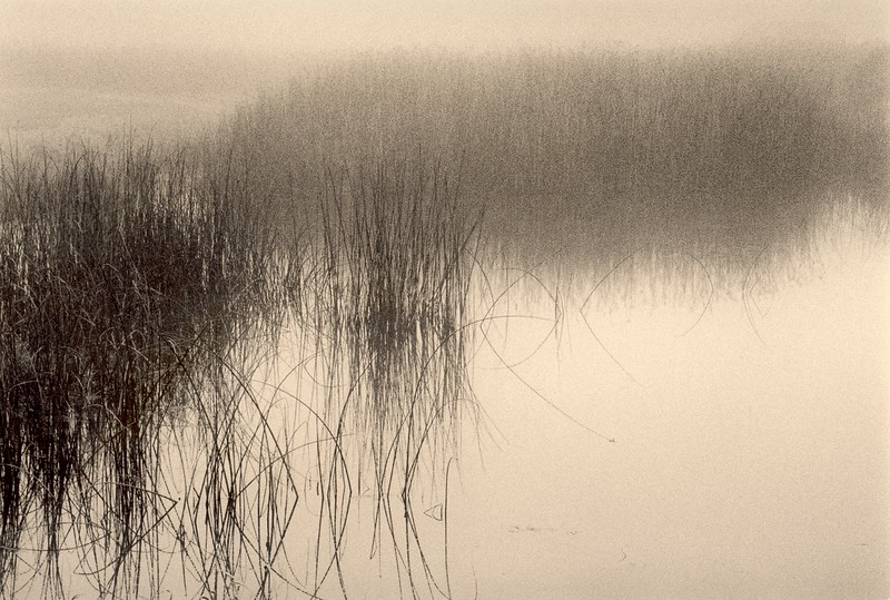 Foggy Pond, Sea Ranch, California