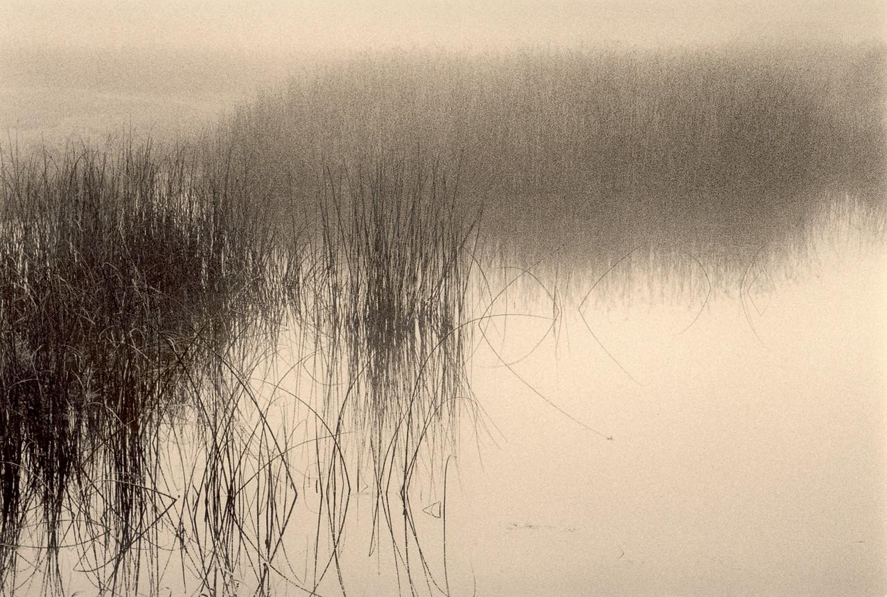 Foggy Pond, Sea Ranch, California