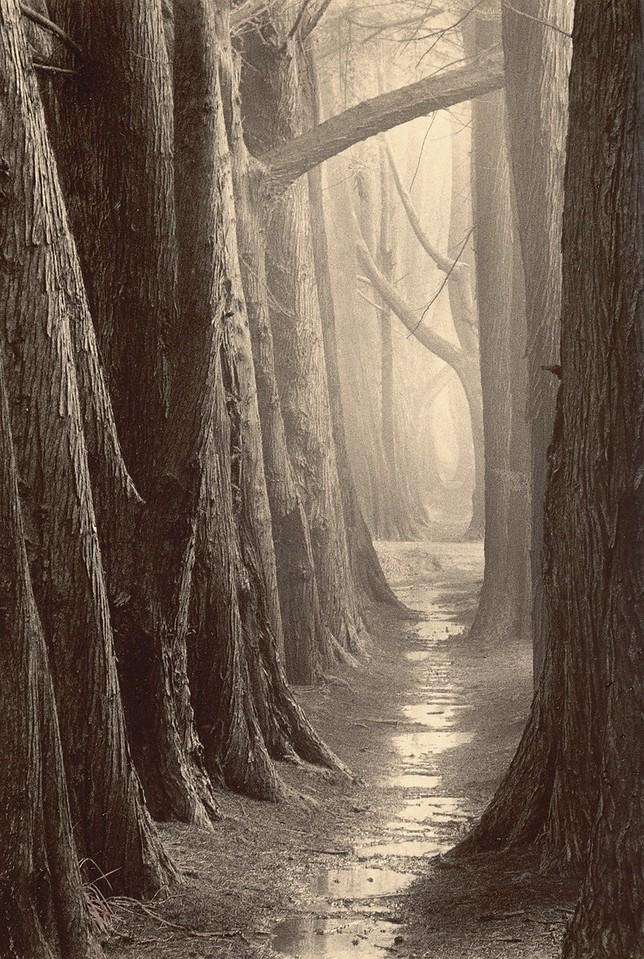 Cypress Trail, Sea Ranch, California