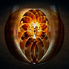 Heart of Nautilus