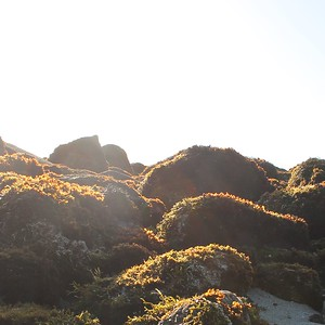 Sunrise over the rocks at Pacific Grove California