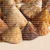 Collection of top shells aptly named as they resemble toy spinning tops