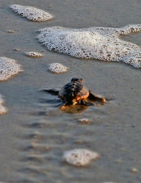 Vert Turtle Tracks