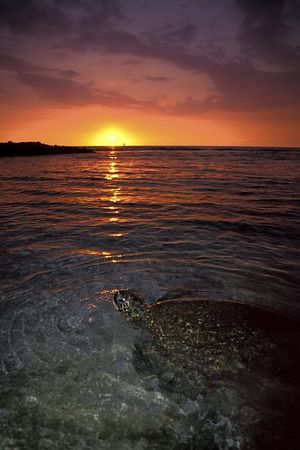 "green sea turtle or "" honu "", Chelonia mydas, <br /> ( endangered species ) forage during sunset at <br /> Honokohau, Hawaii ( Central Pacific Ocean )<br /> 1"