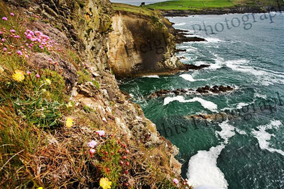 Galley Head 20060507_18x12 051 (Small)