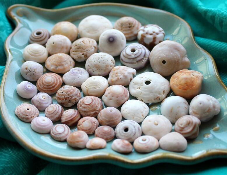Oahu Puka Shells