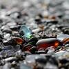 2016.43 Ft Bragg Sea Glass Beach Series 6