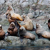 _DX33382 sea lions waiting for tourists