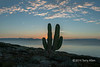 "Cardon cactus at sunset, Isla San Francisco, Baja, Mexico<br /> <br /> Other photos of the area can be seen here: <a href=""http://goo.gl/NhfZ3R"">http://goo.gl/NhfZ3R</a><br /> <br /> 3/02/14  <a href=""http://www.allenfotowild.com"">http://www.allenfotowild.com</a>"