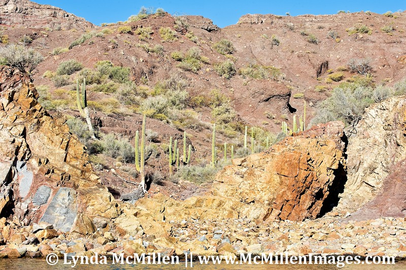 Mexico's Cardon cacti and colorful geology.