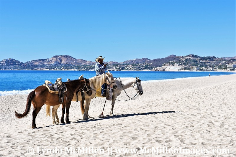 Patiently awaiting tourists in Los Cabos.