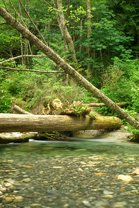 A fallen log just below Shannon Falls. My mom and I crossed this log together and watched the crystal clear water flow underneath our feet. Although it wasn't an extreme adventure, it's a moment I'll never forget sharing with my mom.