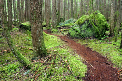 It's places like this that make us love Squamish. This is the Ray Peters trail and it's all of a 5 minute drive from our house.