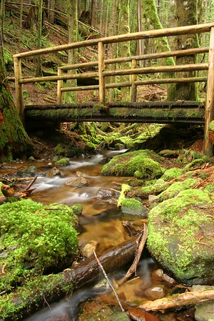 Edith Creek in Alice Lake Provincial Park. This spot is about 6 km from our house in Squamish, BC. The Four Lakes trail is a great day hike with the family.