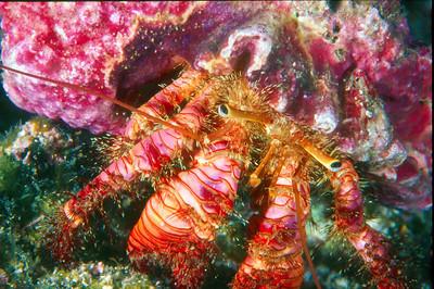 Hermit Crab, San Diego, Ca.