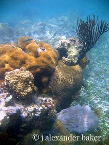 Coral Head, Viequez, PR