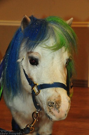 12-14-2016 12 Days Of Goodness with Wilson the 12th Pony