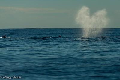 SeaSalt Whale Watch