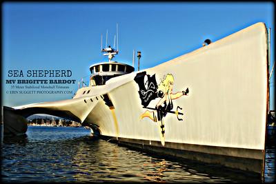 Sea Shepherd's MV Brigitte  Bardot © Erin Suggett Photography