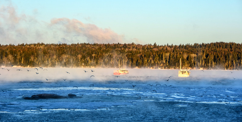 Gulls flying into Sea Smoke - Bunkers Cove, South Gouldsboro
