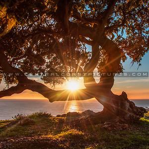 1-30x30 lone tree pismo preserve 2143-
