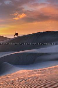 1-24x36 horse_horse-dunes_8046b