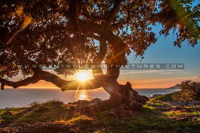 lone tree pismo preserve 2143-