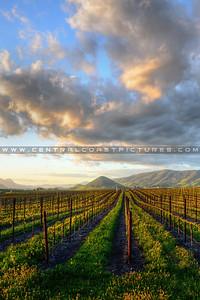 1-20x30 edna-valley-vineyard_6593 cropped