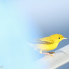 Yellow Warbler, off Hatteras 8 August 2014