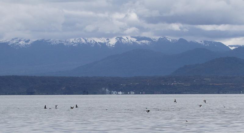 Seno Reloncavi, Chile 28 October 2011