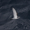 Antarctic Prion