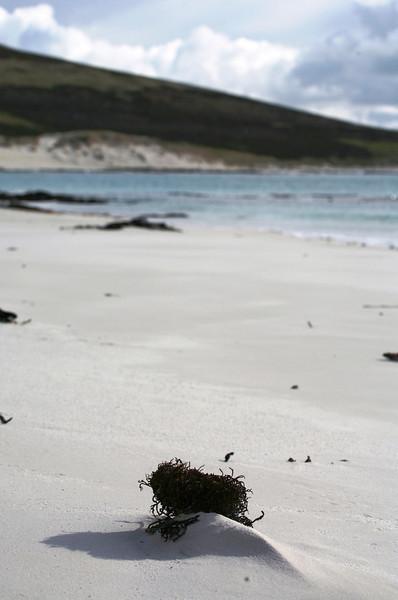 Carcass Island ...
