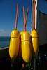 Sun kissed buoys, Hampton Harbor