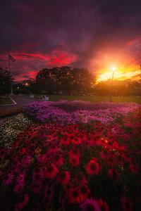 Flowers At Prescott Park