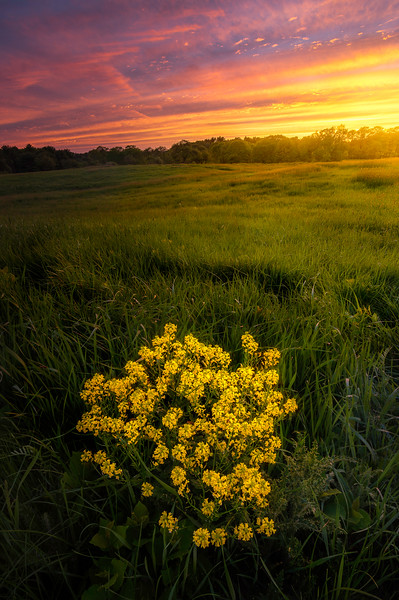 Wildflowers At Wagon Hill
