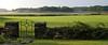 Rye - gate and stone wall