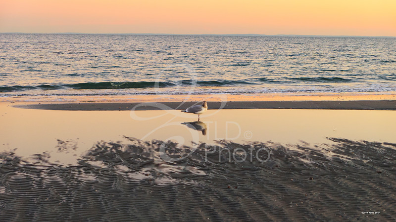 TLD_Seagull_Sunset