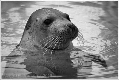 Seal Rescue Center Pieterburen