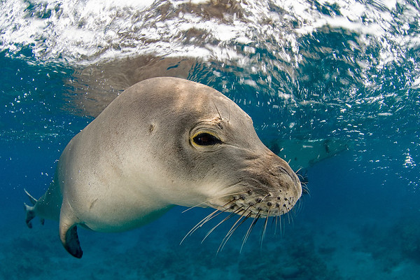 Seals and other Mammals
